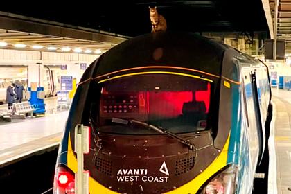 Своенравная кошка задержала отправление скоростного поезда на два часа