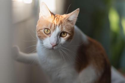 Замурованная кошка провела два дня в стене дома и выжила