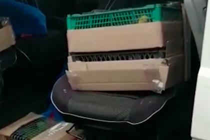 Гаишники поймали набитую редкими попугаями машину и сняли на видео