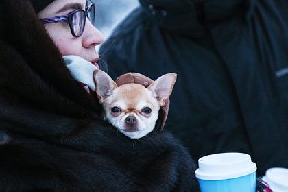 Кинолог развеял популярные мифы о маленьких собаках