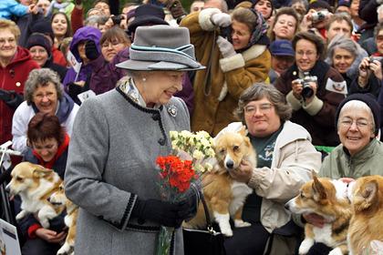Елизавете II подарили двух новых корги