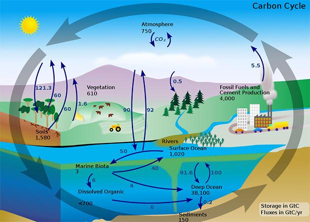 Круговорот углерода на Земле