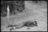 Убитый темнокожий французский солдат. Франция, 1940 год.