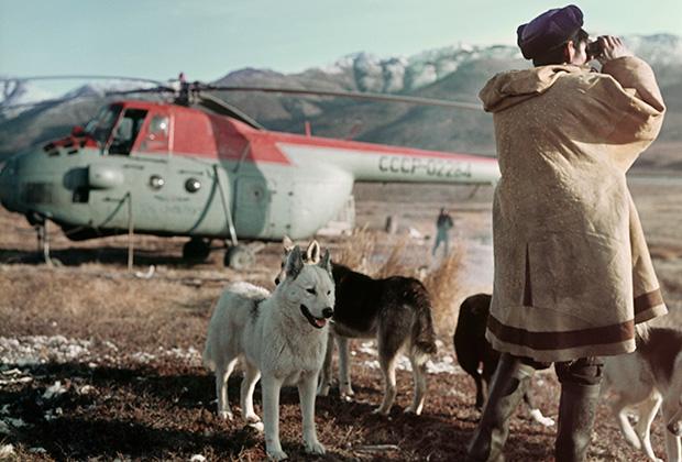 Пастух колхоза имени Жданова следит за стадом оленей, Магаданская область