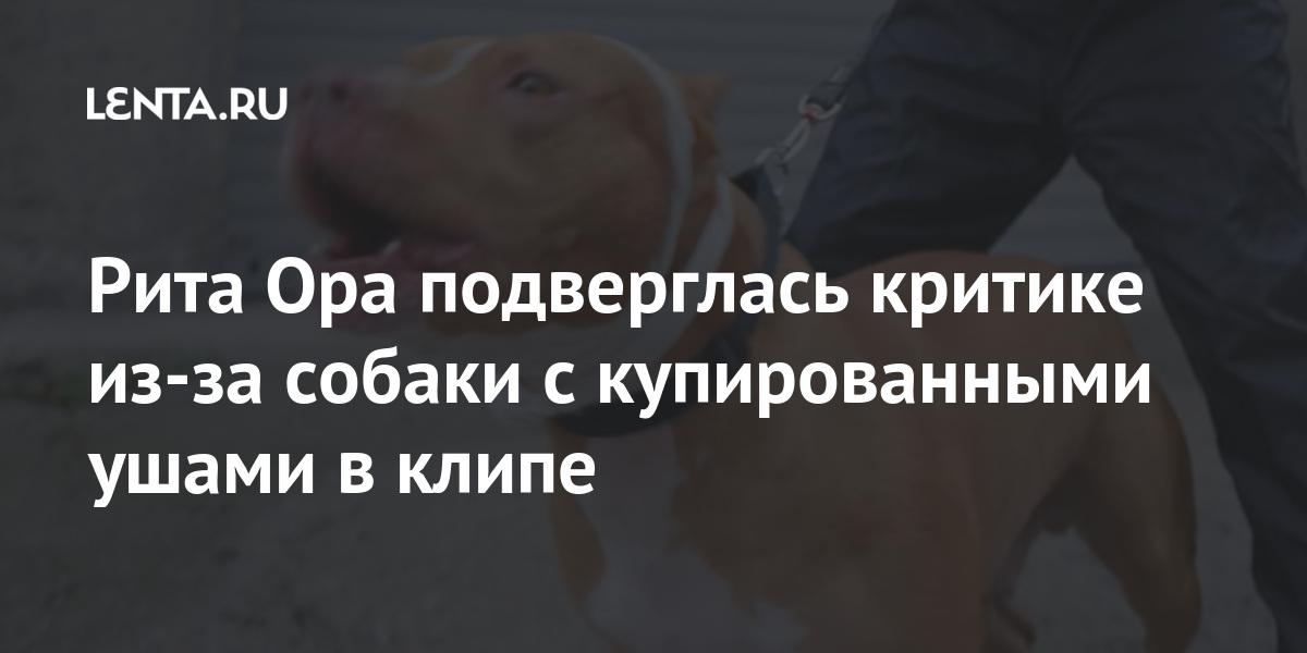 Рита Ора подверглась критике из-за собаки с купированными ушами в клипе Культура