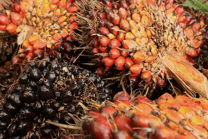 Россия закупилась пальмовым маслом