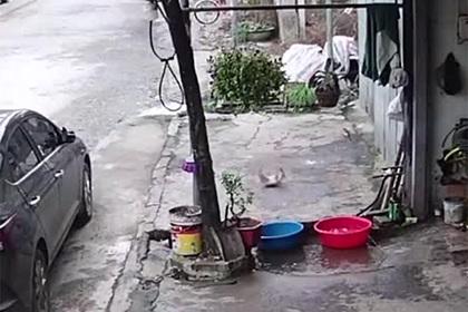 Пойманная рыба допрыгала до канализации и спаслась от съедения
