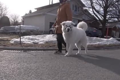 Собака спасла жизнь хозяйки на прогулке