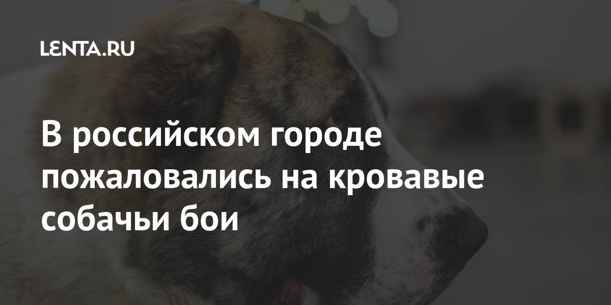 share 3a6ca5519b61df741673313bc122f886 В российском городе пожаловались на кровавые собачьи бои