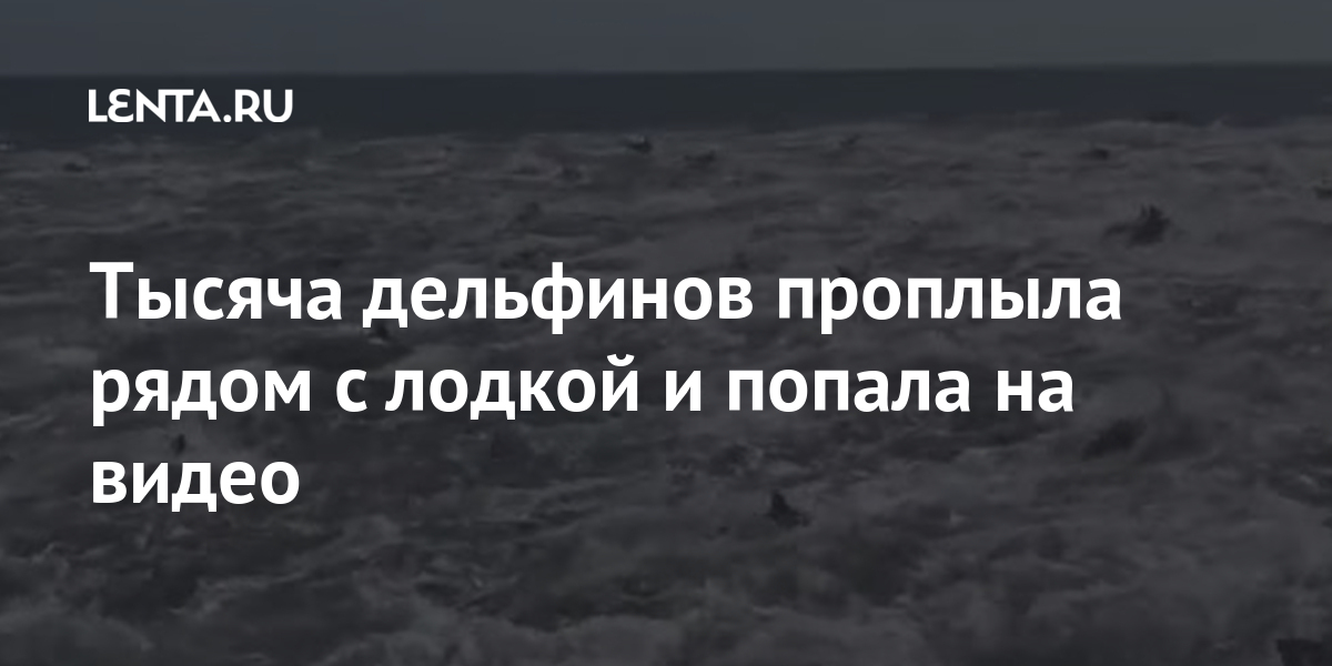 share 50d971313cfa56eba9ccc1b784e10501 Тысяча дельфинов проплыла рядом с лодкой и попала на видео
