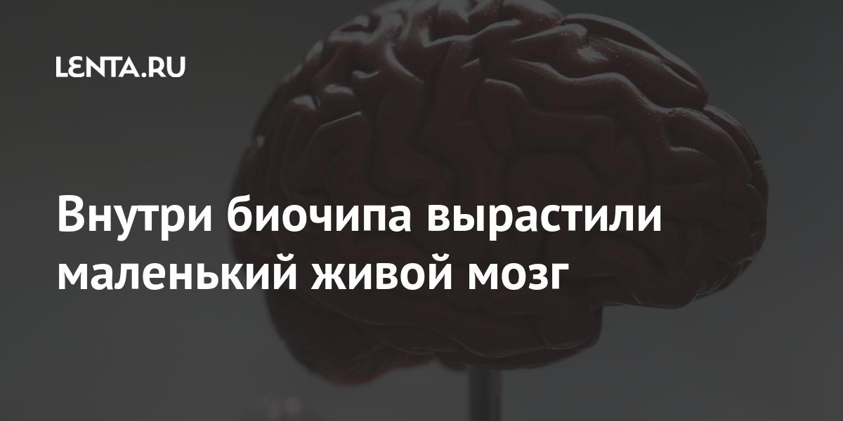 share 8338ed21bbd43edb9650fdaa3ca05181 Внутри биочипа вырастили маленький живой мозг