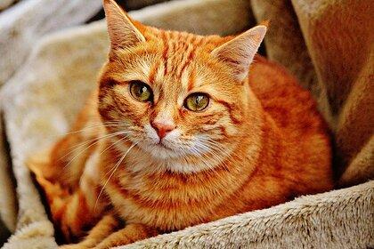 В российском городе 12 кошек «арестовали» за долги хозяйки: Общество: Россия: Lenta.ru