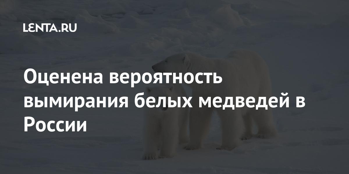 share 40d99a0a804b602a221a9d8fa29506cf Оценена вероятность вымирания белых медведей в России