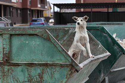 Подсчитано число бездомных собак в России