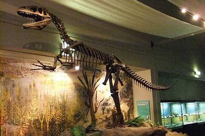 Женщина собирала моллюсков на обед и наткнулась на огромный след динозавра