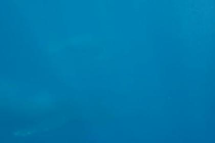 Горбатый кит выпрыгнул в метре от ныряльщиков и попал на видео