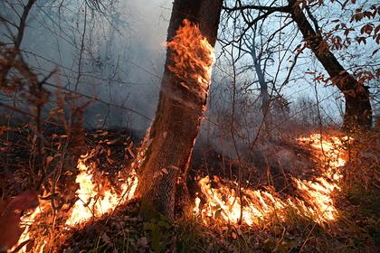 Перечислены российские регионы с высоким риском природных пожаров