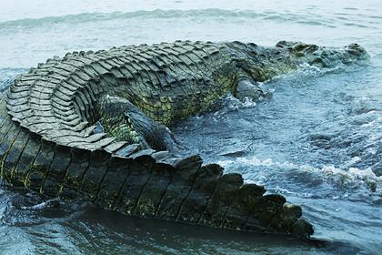 Крокодилы растерзали закидывавшего сети на реке рыбака