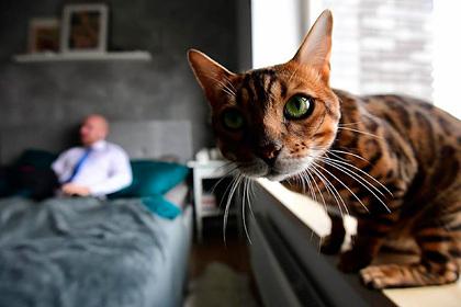Совфед запретил изымать домашних животных за долги