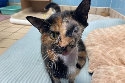 Кошка попала под автобус, скрывалась от людей 16 дней и выжила