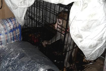 В российском автобусе среди багажа обнаружили макаку