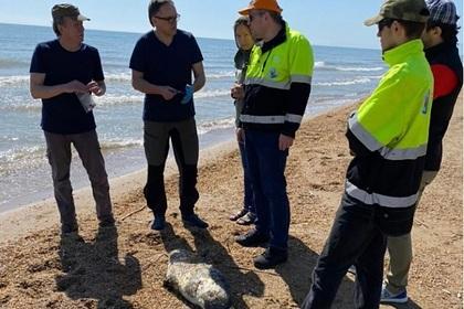 Ученые назвали причину гибели 150 краснокнижных нерп на берегу Каспийского моря