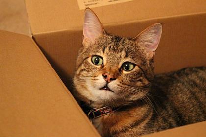 Ученые обнаружили у кошек любовь к воображаемым коробкам