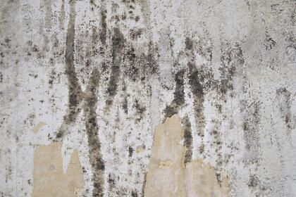 Россиян предупредили об опасности плесени на стенах
