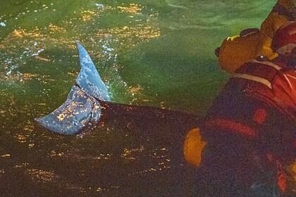 Детеныш кита застрял в шлюзе Темзы и попал на видео