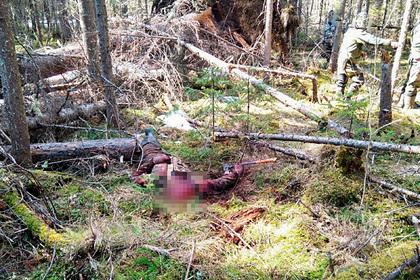 Собравшегося рубить лес россиянина растерзал медведь