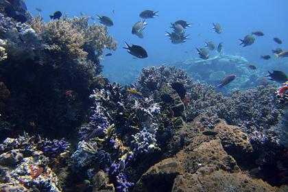 Найден способ спасти мировой океан