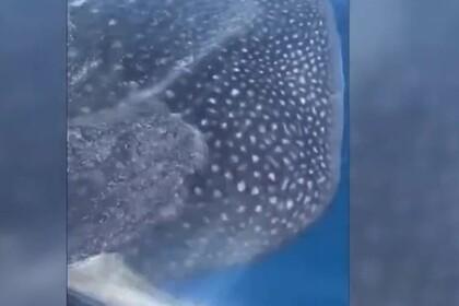 Три огромные акулы окружили катер рыбаков и попали на видео