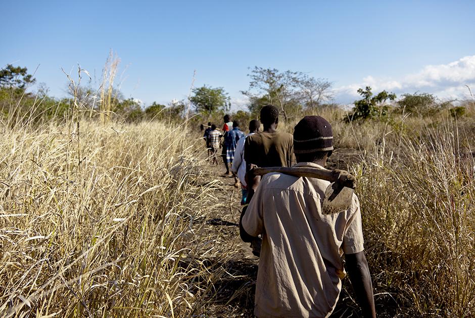 Ловцы крыс выходят из деревни Мадамба и идут на охоту ранним утром