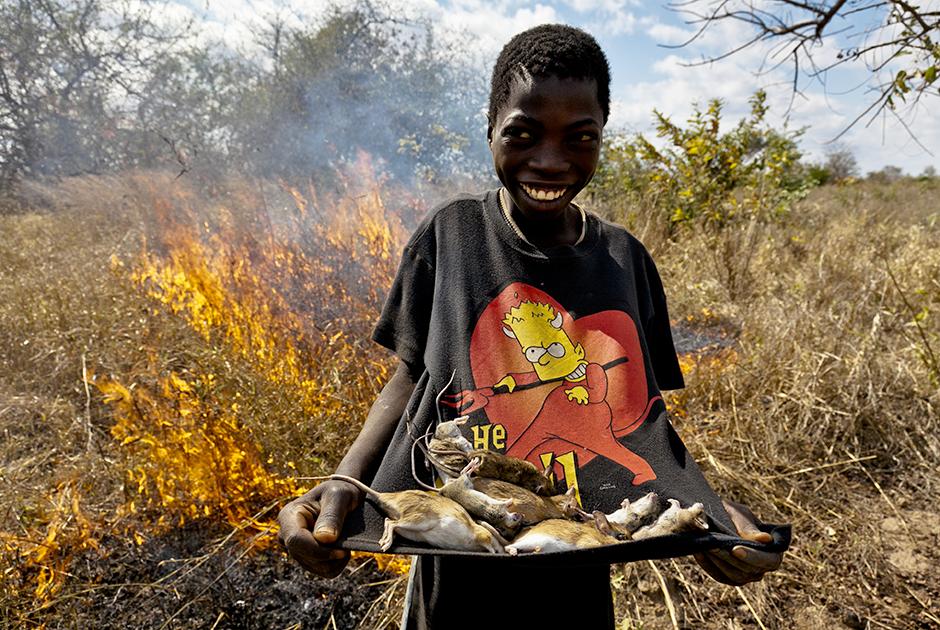 Крысолов с добычей на фоне горящего поля