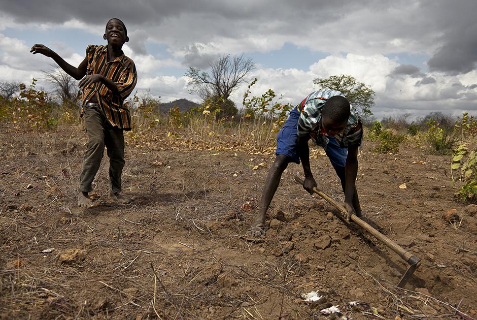 Мозамбикцы ловят крыс с песнями и танцами