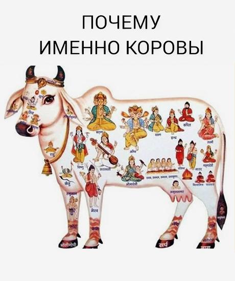 Материалы адептов секты Гошала Адити, в которую попал Виктор Дружич