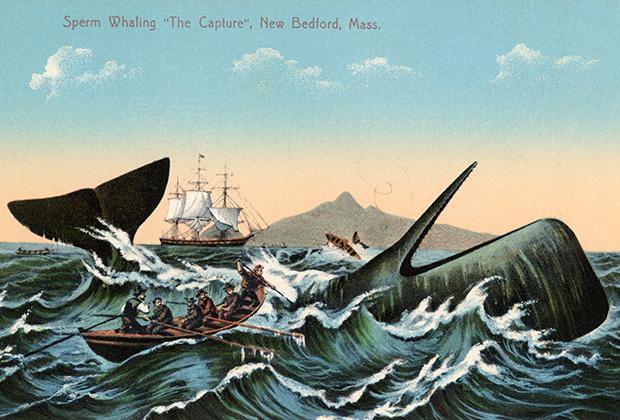 Охота на кашалота. Американская иллюстрация 1910 года