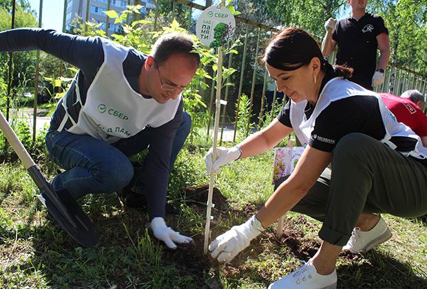 Команды Сбера участвуют в акции по всей стране, и к осени высадят уже 180 тысяч деревьев.