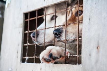 США запретят ввоз собак из России
