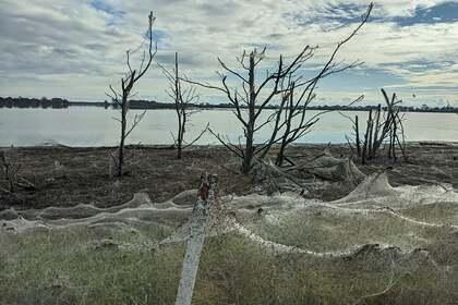 Миллионы пауков сбежали от потопа и устроили «апокалипсис»