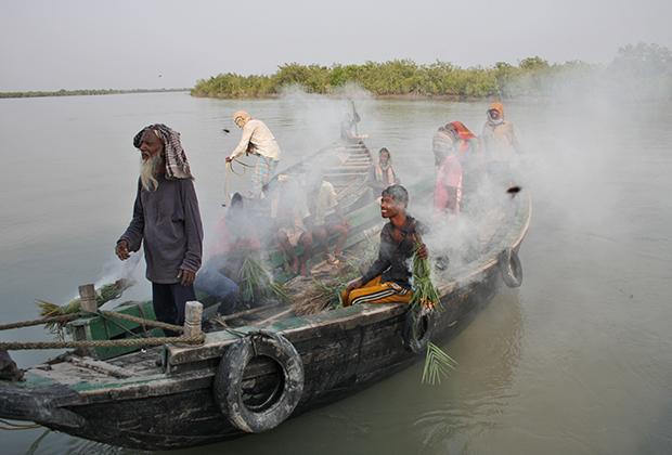 Сборщики дикого меда в Сундарбане
