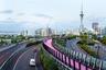 """Веломаршрут Nelson Street Cycleway находится в новозеландском Окленде. Он был построен на месте старого съезда с магистрали, который оказался неудобен для автомобилистов. Местные власти в сотрудничестве с архитектурным бюро Monk MacKenzie решили использовать объект по-новому. Работы <a href=""""http://landlab.co.nz/projects#/light-path/"""" target=""""_blank"""">обошлись</a> в 10 миллионов долларов.<br><br>С 2015 года жители добираются по дороге до центра города. Маршрут <a href=""""https://urbannext.net/nelson-st-cycleway/"""" target=""""_blank"""">известен</a> 600-метровым участком, окрашенным в ярко-розовый цвет. Вдоль велодорожки установлены 300 светодиодных ламп, сверкающих в темное время суток. Из-за переливов дорогу называют Te Ara I Whiti, что в переводе с языка маори «световой путь». Не обошлось без критики — некоторые жители <a href=""""https://www.pippacoom.co.nz/tag/nelson-st-cycleway/"""" target=""""_blank"""">пожаловались</a> на подъезды к дороге, которые создают проблемы для не очень уверенных в мастерстве велосипедистов. Спустя время <a href=""""https://www.stuff.co.nz/life-style/89345708/aucklands-18m-cycleway-opens-up-the-inner-city"""" target=""""_blank"""">ухудшилось</a> и качество покрытия — пурпурный оттенок местами выцвел."""