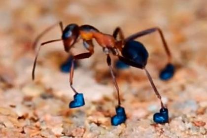 Мужчина сумел обуть муравья ради славы в соцсетях