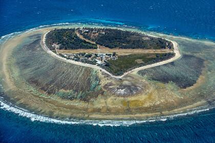 Коралловый риф размером с Японию оказался в шаге от гибели