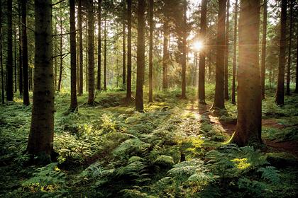 Миллионеру запретили портить лес «выдающейся красоты»