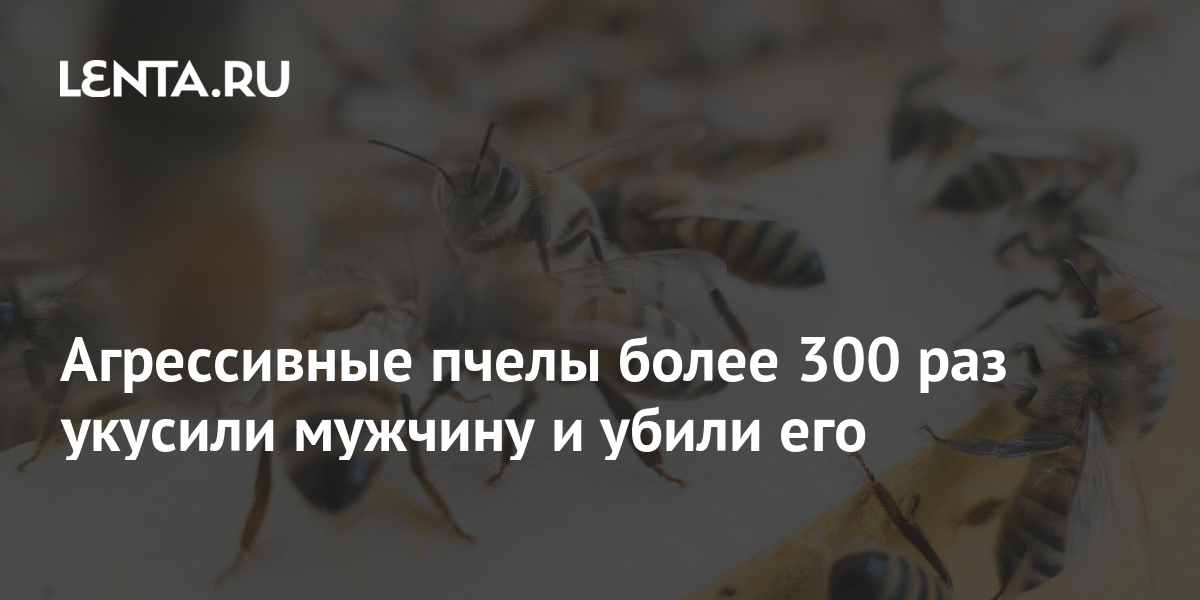 share 3265b5c1823bfae139e18aea1ba3425e Агрессивные пчелы более 300 раз укусили мужчину и убили его