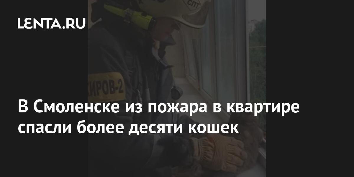 share 1e4b1960fd3d81c43f3db660a32f8066 В Смоленске из пожара в квартире спасли более десяти кошек