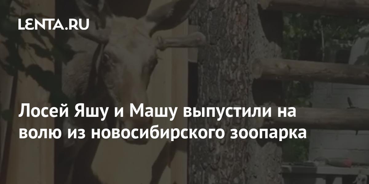 share 8f6010fed56934daecc8f81697bff1d6 Лосей Яшу и Машу выпустили на волю из новосибирского зоопарка