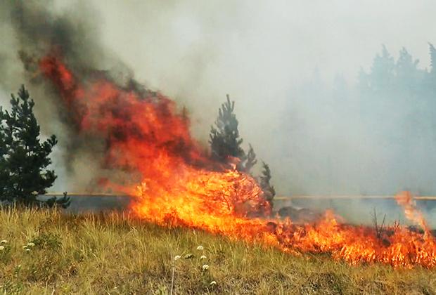Лесной пожар в Челябинской области