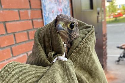 Омичи спасли редкого птенца от гибели